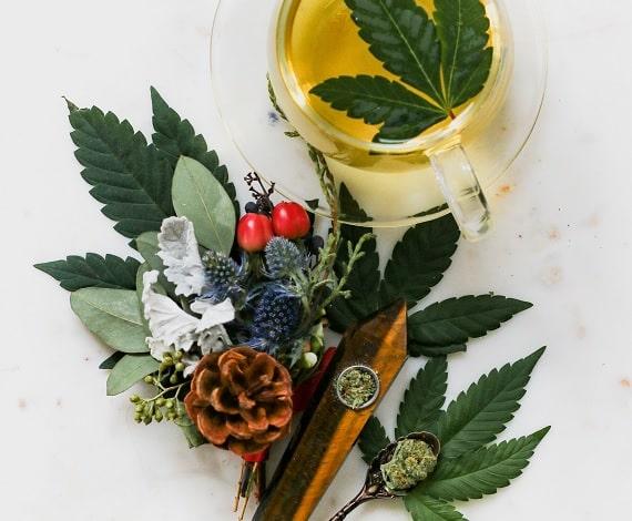 cbd cannabis
