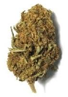 orange bud cbd